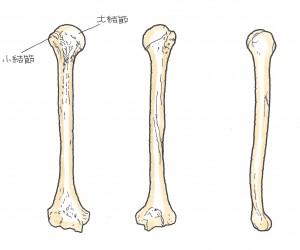 上腕骨近位端骨折4